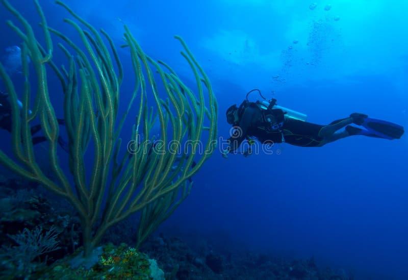 潜水员和软的珊瑚,缓慢地Cayo,古巴 库存图片