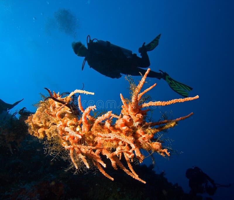 潜水员女性水肺 库存照片