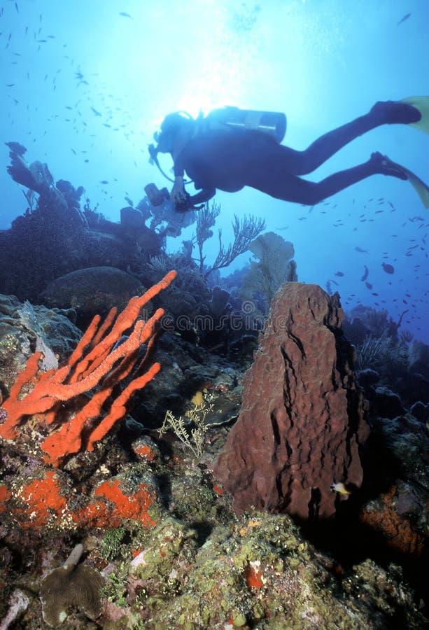 潜水员手指n红色海绵 图库摄影