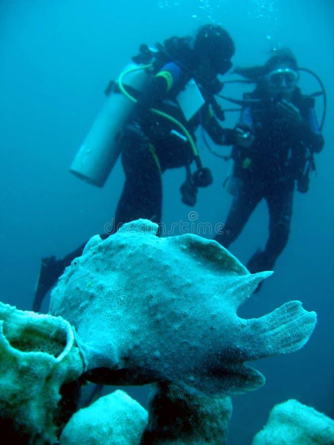 潜水员水下鳖鱼科之鱼的水肺 库存图片