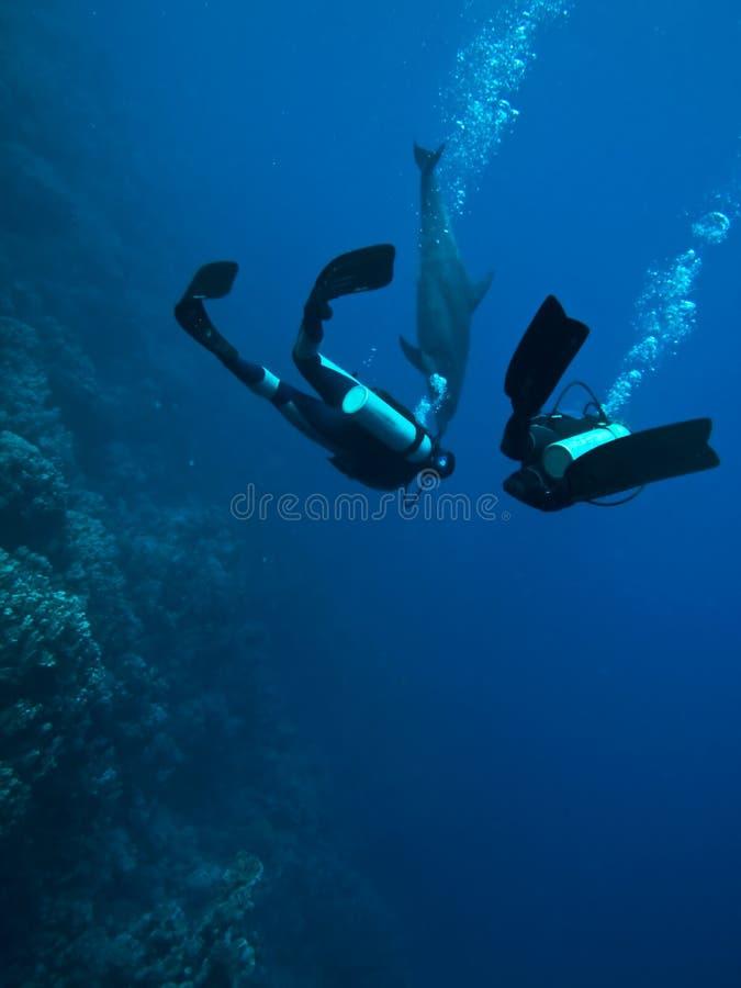 潜水员海豚水下遭遇的水肺 图库摄影