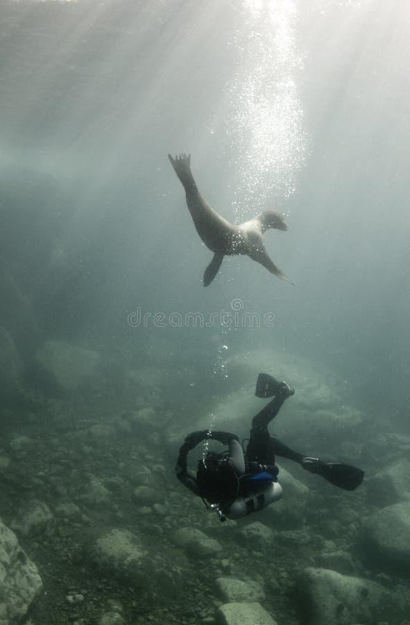 潜水员狮子海运 库存图片