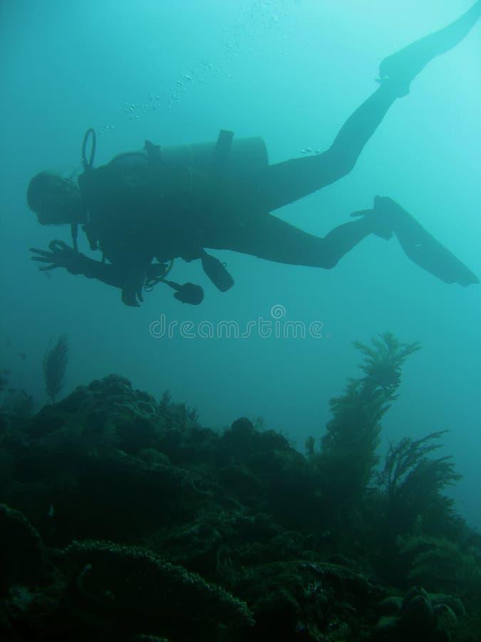 潜水员现有量水肺发信号sipadan 免版税库存图片