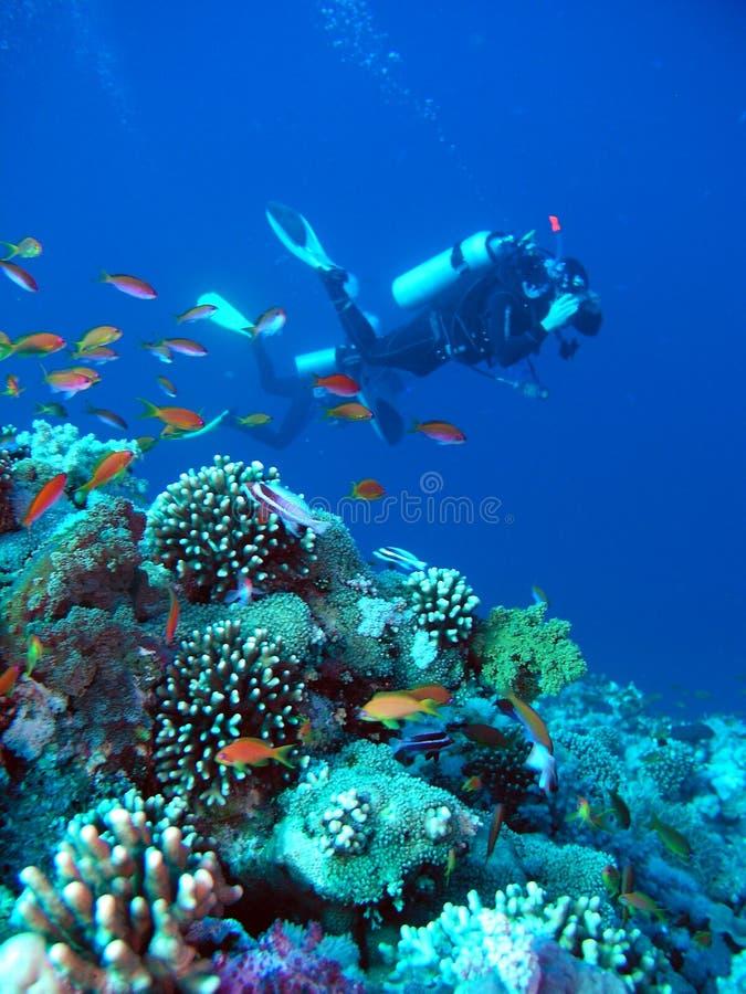 潜水员礁石水肺 库存图片