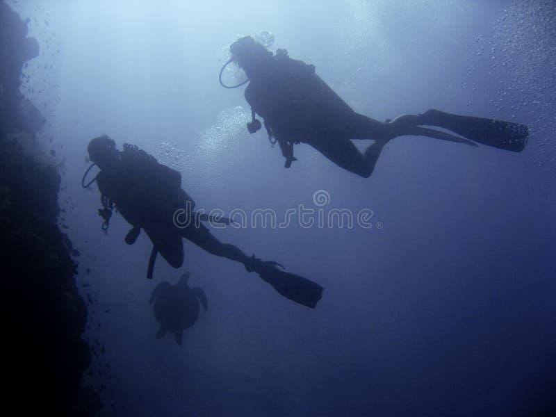 潜水员礁石水肺sipadan乌龟墙壁 库存照片