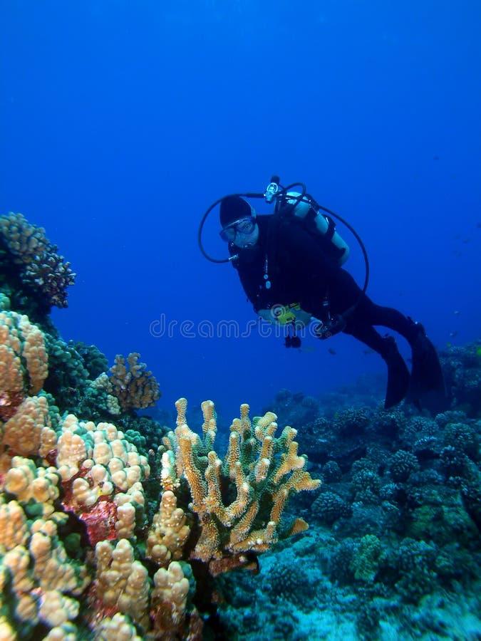 潜水员被点燃的礁石 库存照片