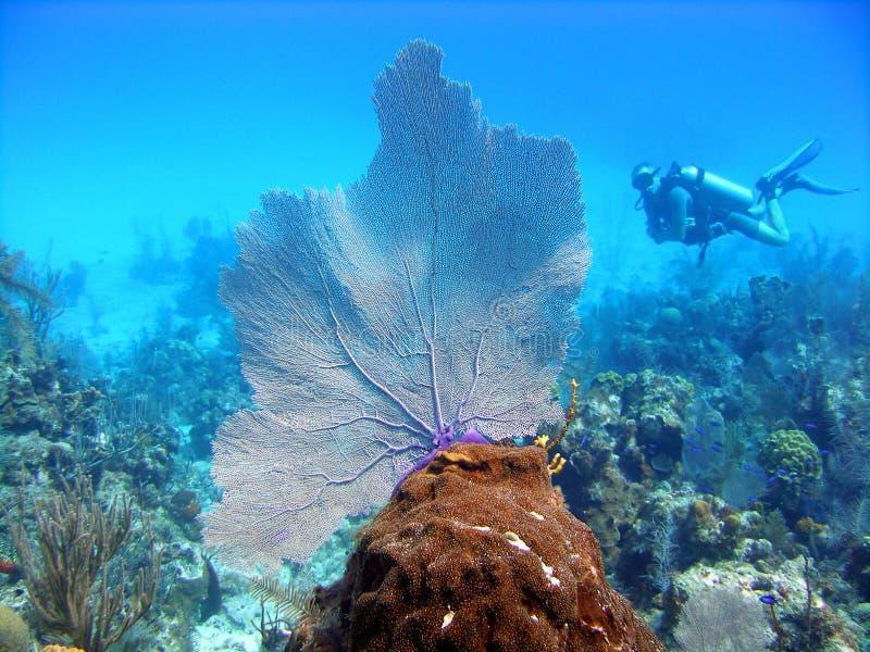 潜水员风扇海运 免版税库存图片
