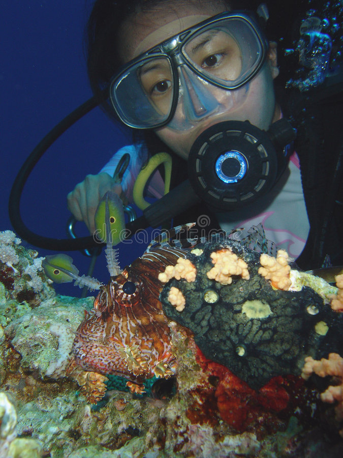潜水员鱼狮子 库存图片