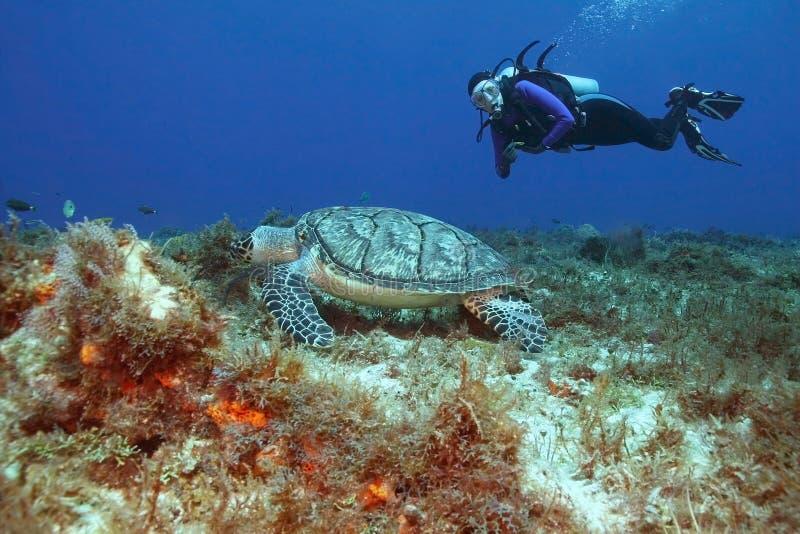潜水员hawksbill水肺乌龟 库存照片