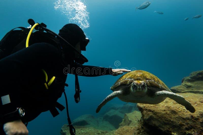 潜水者和乌龟 库存图片