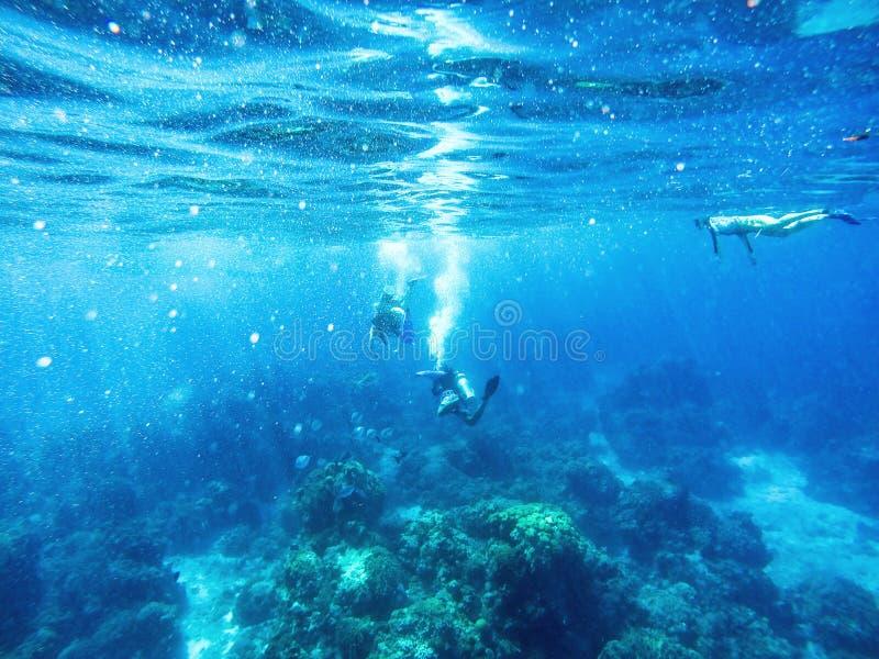 潜水者和Snorklers在加勒比海 免版税库存图片