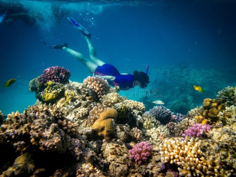 潜航在Marsa阿拉姆,埃及 珊瑚礁和狮子鱼 免版税库存照片