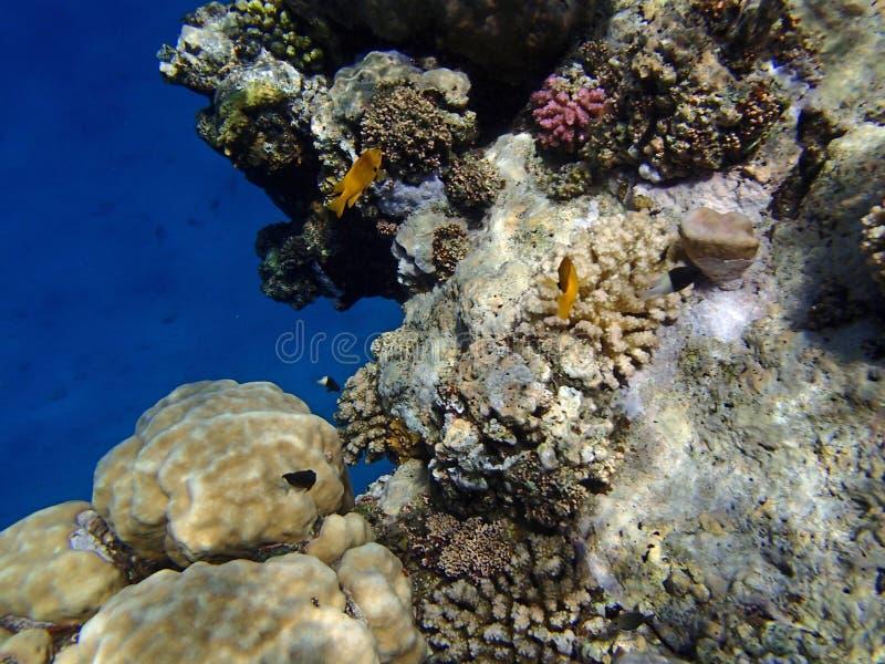 潜航惊人的红海 库存照片