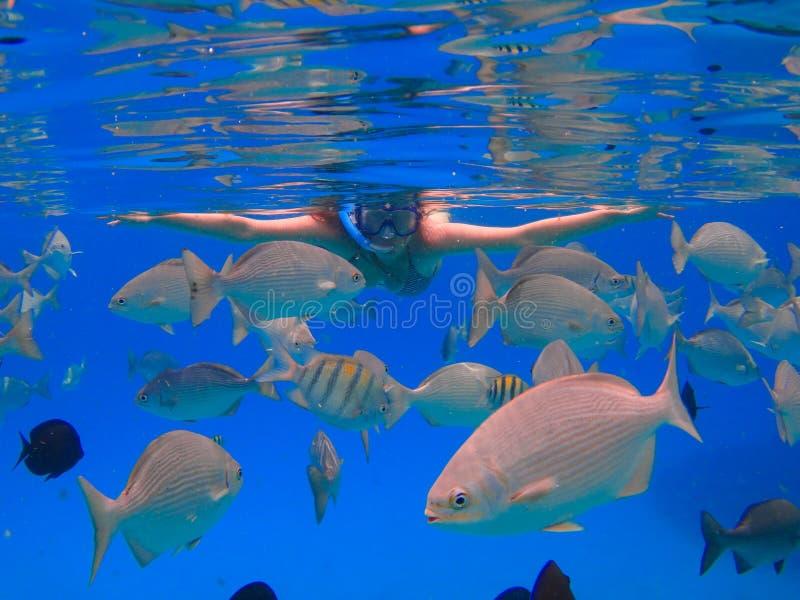潜航美丽的女孩 库存图片
