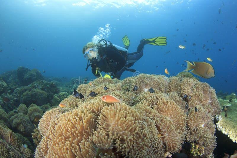轻潜水员探索珊瑚礁 库存图片