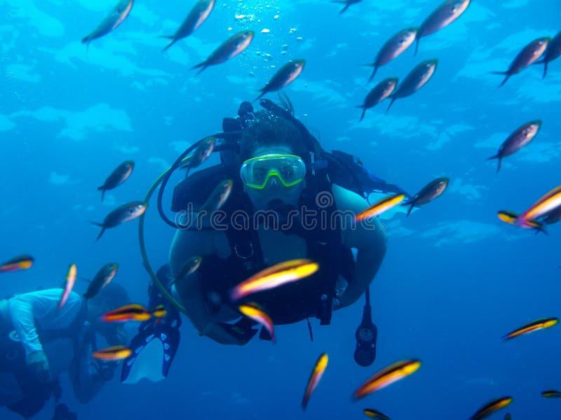 潜水在海o科尔特斯巴哈墨西哥 库存图片