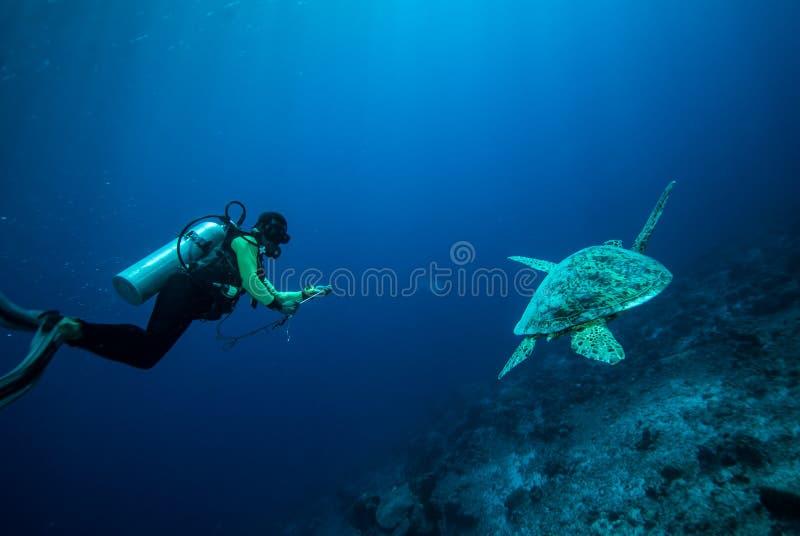 潜水者和绿浪乌龟在Derawan,加里曼丹,印度尼西亚水下的照片 免版税库存照片