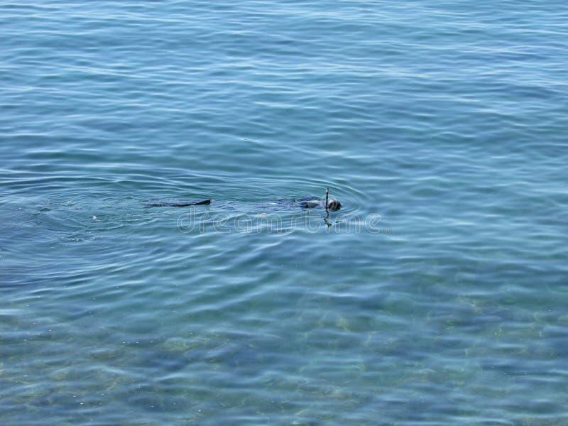 潜水者在海 库存照片