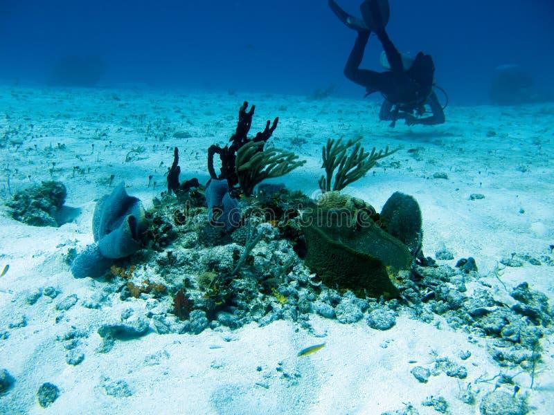 潜水者在科苏梅尔 免版税库存照片