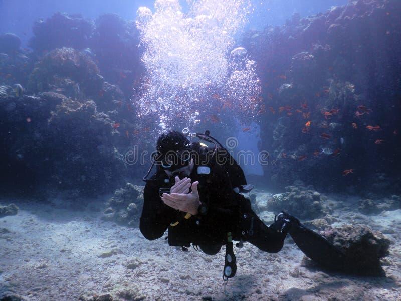 潜水者姿态左半空气 免版税图库摄影