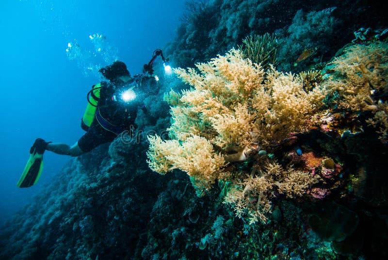 潜水者采取录影在珊瑚kapoposang印度尼西亚佩戴水肺的潜水 免版税图库摄影