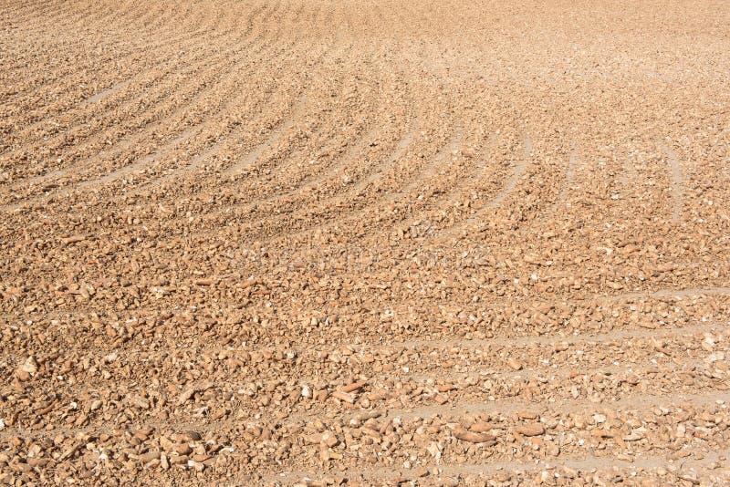 潮湿木薯粉根烘干在烧焦的太阳下 免版税库存图片