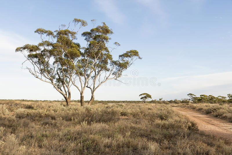 澳大利亚布什横向 库存照片