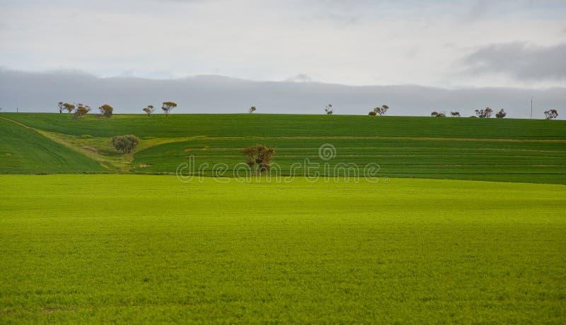 澳大利亚横向 免版税库存图片