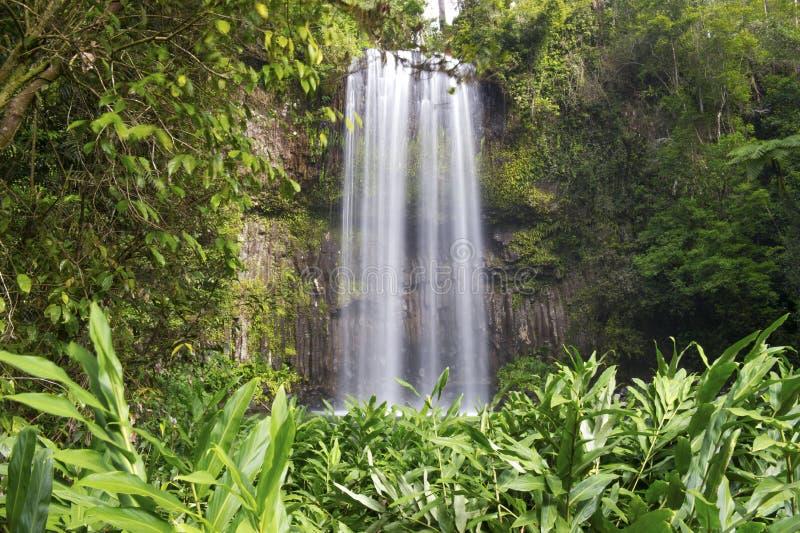 澳大利亚瀑布Millaa Millaa落,北部昆士兰, Aust 免版税库存照片