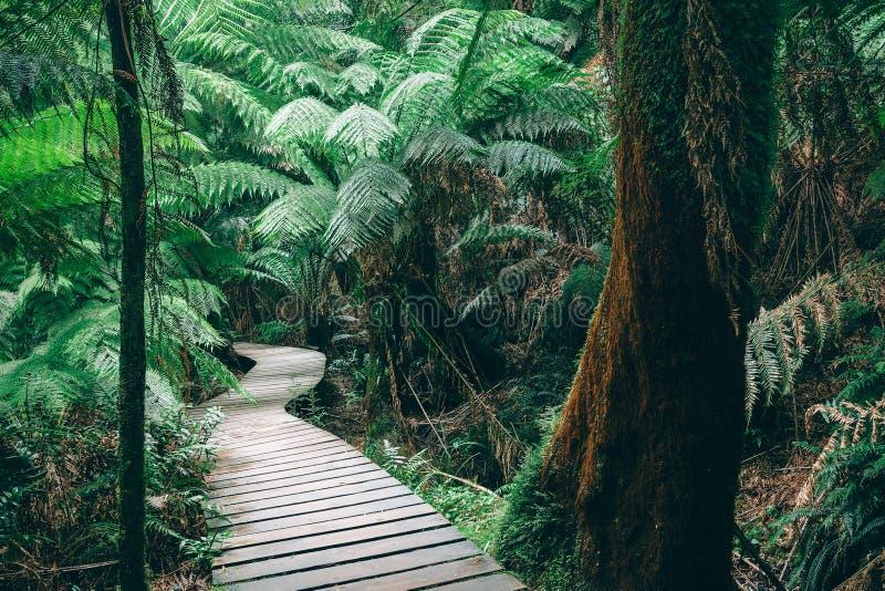 澳大利亚雨林的绕木板走道 免版税库存照片