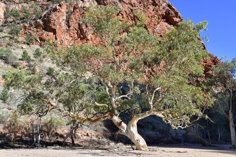 澳大利亚,北方领土,在内地 免版税库存图片