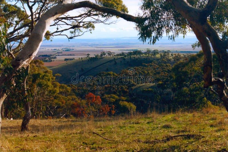 澳洲保护沟壑公园春天 库存图片