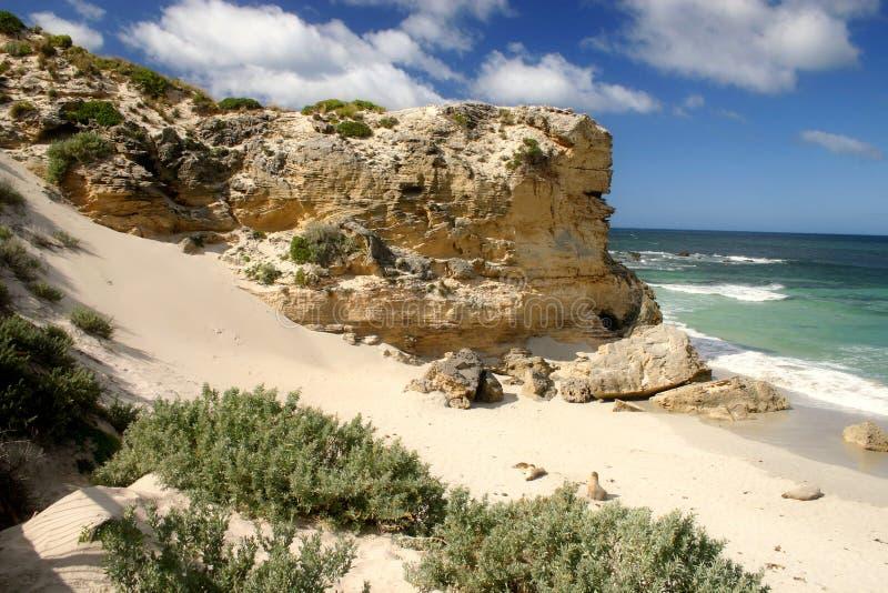 澳洲海湾密封 库存照片