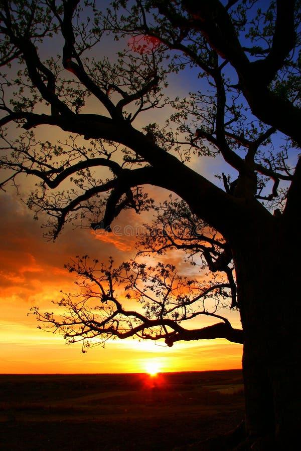 澳洲boab金伯利结构树 免版税库存图片