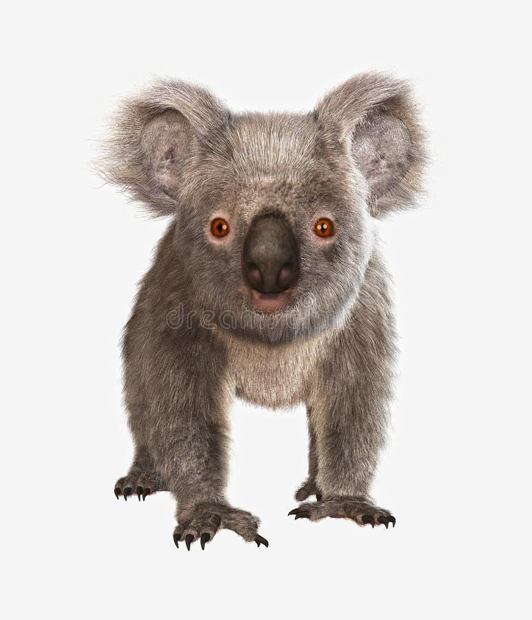 澳洲熊被采取的考拉照片 向量例证