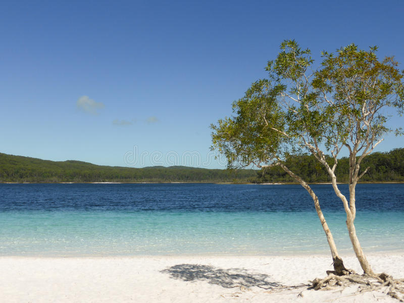 澳洲fraser海岛 免版税库存图片