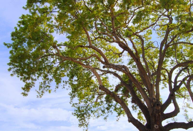 激动人心的结构树 库存图片