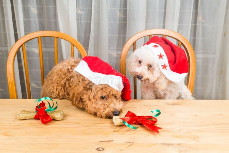 激动的狗的概念在圣诞老人帽子的有在tabl的圣诞节礼物的 库存照片