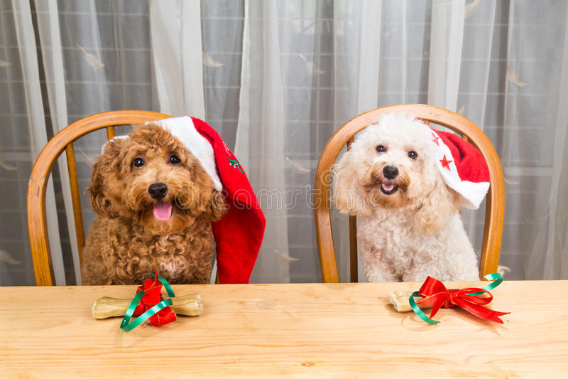 激动的狗的概念在圣诞老人帽子的有在tabl的圣诞节礼物的 免版税库存照片