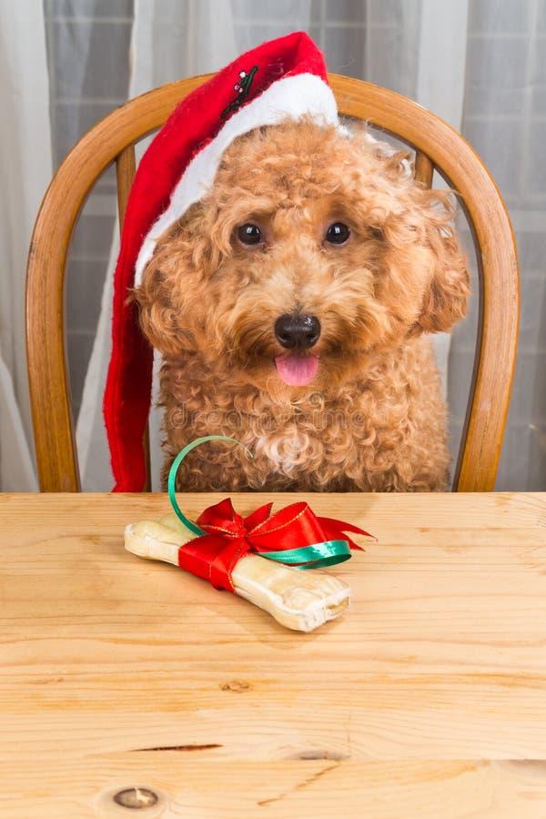 激动的狗的概念在圣诞老人帽子的有在tabl的圣诞节礼物的 免版税库存图片