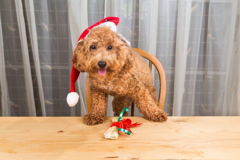 激动的狗的概念在圣诞老人帽子的有在tabl的圣诞节礼物的 库存图片
