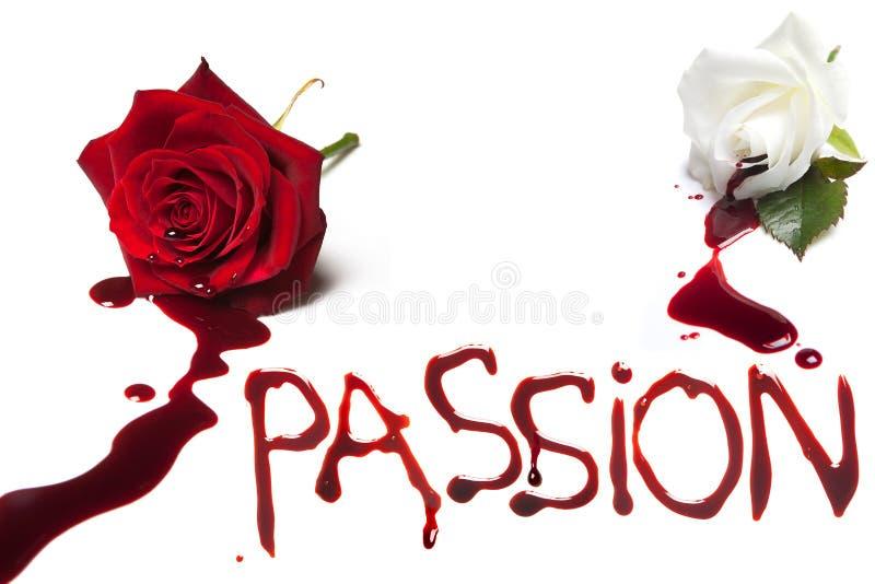 激情的出血玫瑰 免版税库存照片