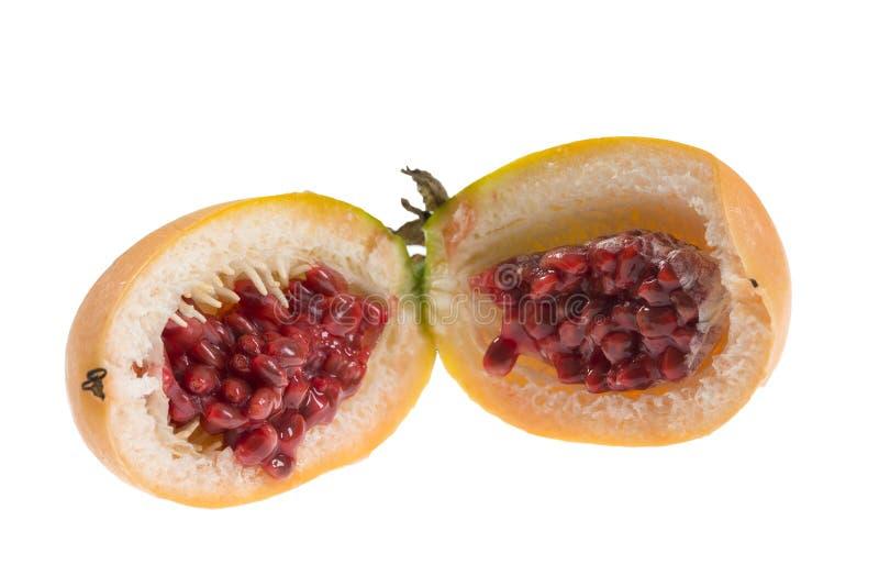 激情花的果子 库存图片