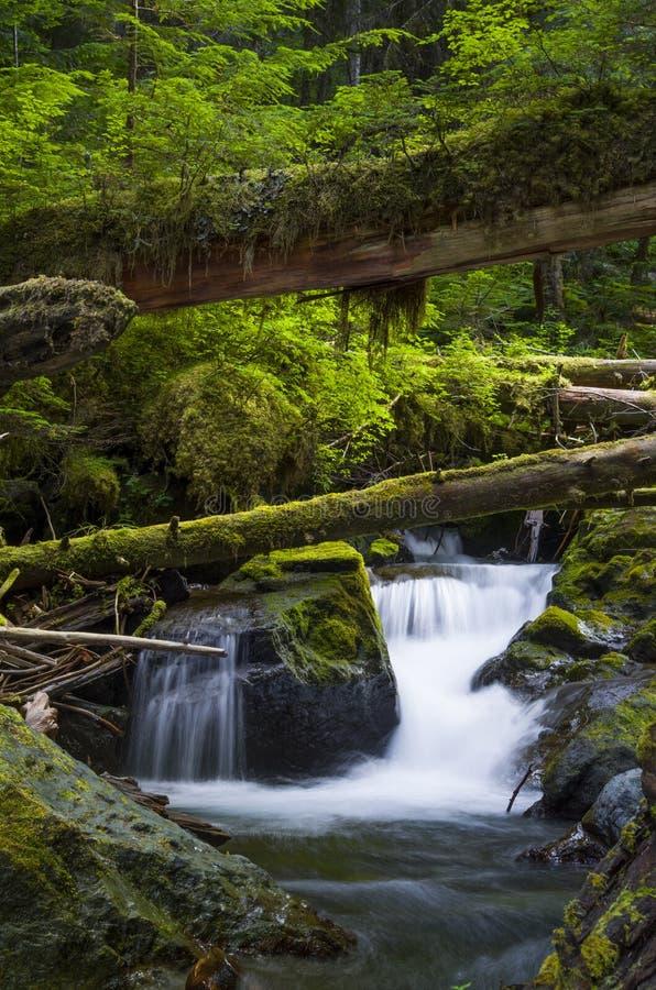 瀑布和下落的树在森林奥林匹克国家森林华盛顿州 免版税库存图片