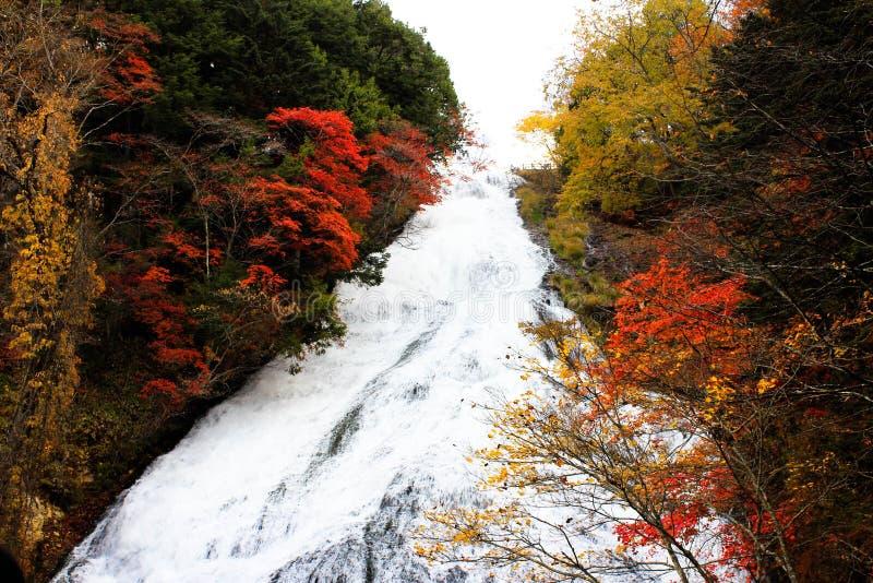 瀑布和红色叶子 免版税库存照片