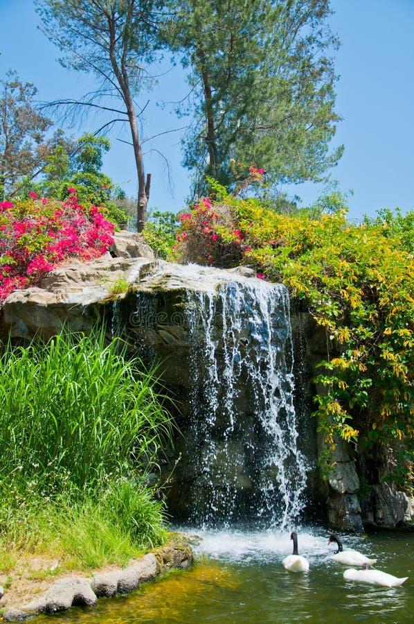 瀑布和鸭子在洛杉矶动物园里  库存照片