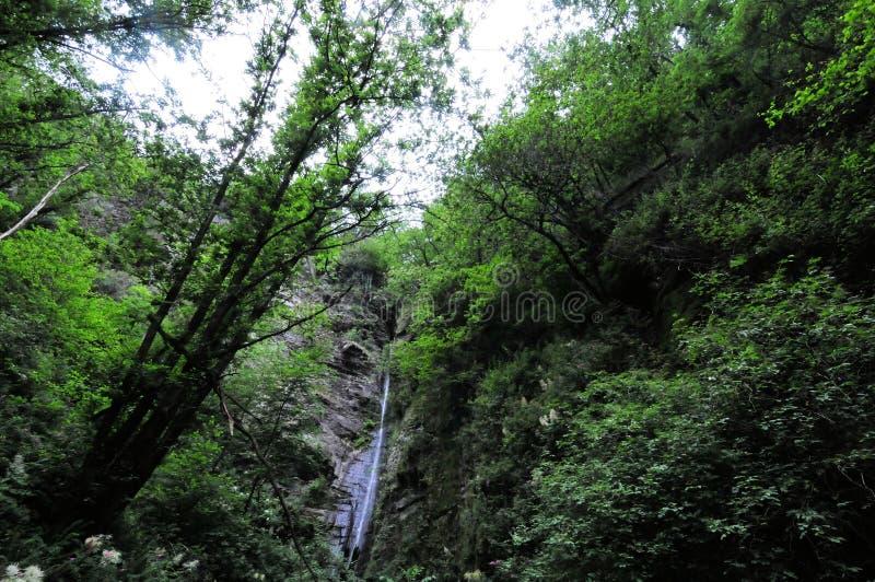 瀑布在意大利的山的森林里 库存照片