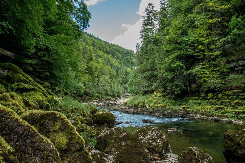 瀑布在法国森林里 免版税图库摄影