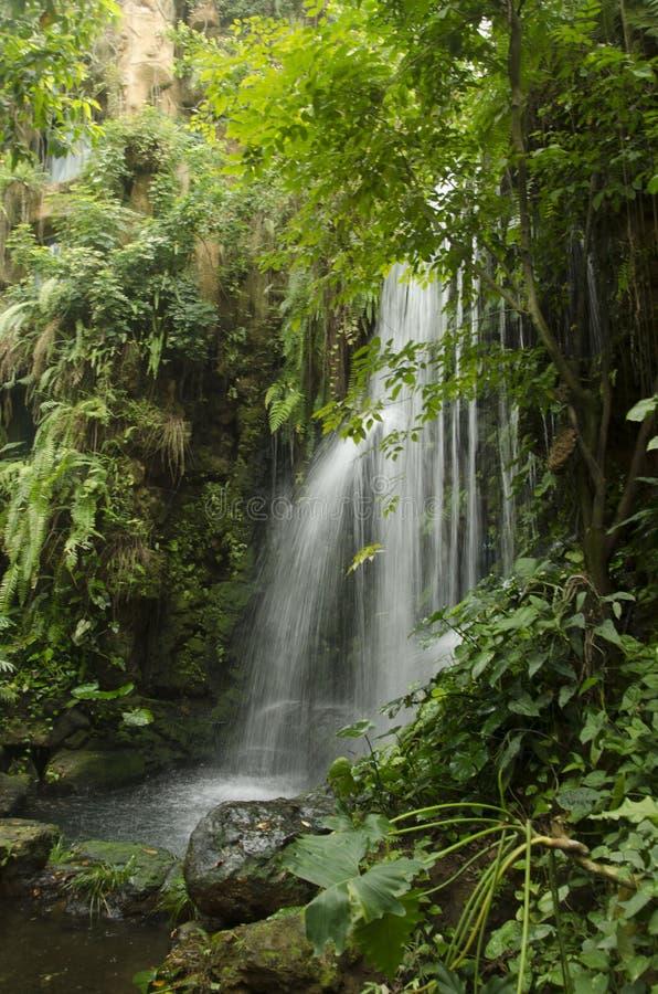瀑布在深森林里 免版税库存图片