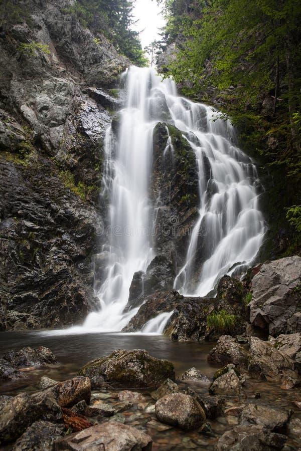 瀑布在深森林 免版税库存图片